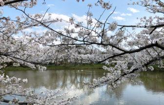 【大船】買い占めたいくらい美味しいパン屋さん、ベッカライ ジーベン!谷戸池の桜と亀